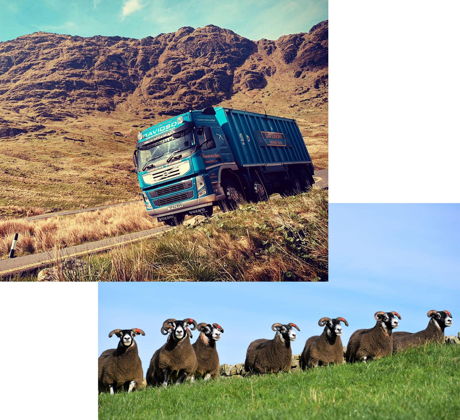 Sheep and Trucks