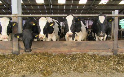 How Efficient is your Herd?