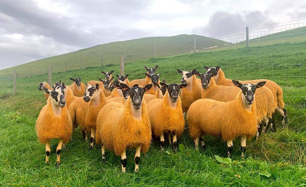 Meet our Farmers Nisbet