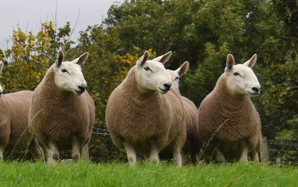Soypro Sheep 34 Pellets