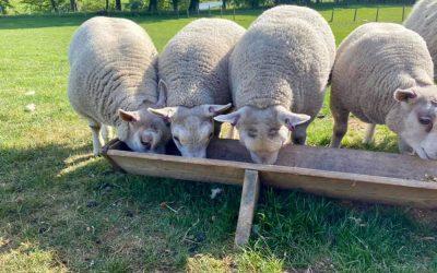 Ultimate Lamb