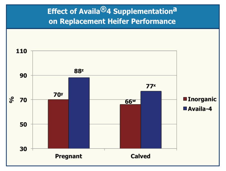 Figure 2. Effect of Availa supplementation on replacement heifer performance